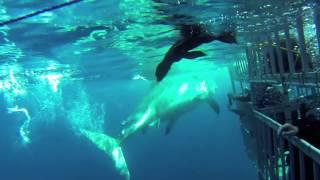 Shark Escape by Shark Diver™ Films