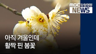 R)활짝 핀 봄꽃, 가파른 기온 상승