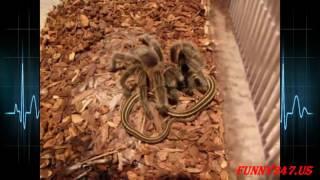 Snake vs Spider Real Life