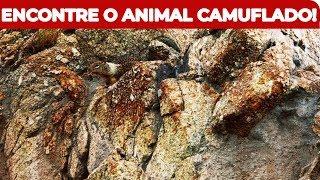 TE DESAFIO A ENCONTRAR OS ANIMAIS CAMUFLADOS NAS IMAGENS!