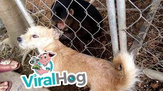 Monkey Grooming a Dog || ViralHog