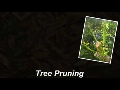 Apex NC Tree Removal | (919) 500-5311