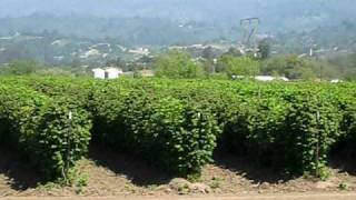 Pajaro Valley California High Tech Agriculture Jack D Deal Videos