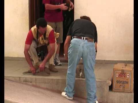 : Мексиканская динотопия (12)