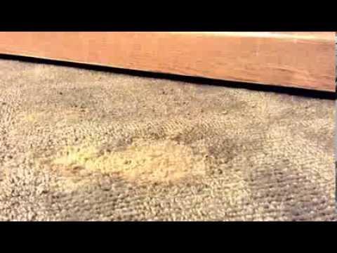 Cigarette Burn Repair Kit Carpet How to Repair Burn in Carpet