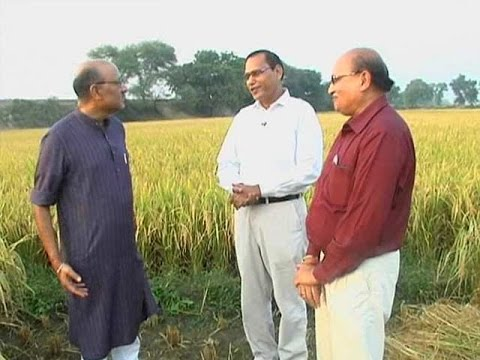 Walk The Talk with developers of Pusa-1509 rice
