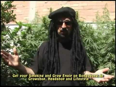 Tips & Tricks to grow indoor or outdoor marijuana (weed video)