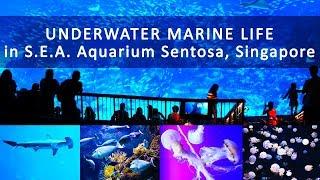 Visiting the underwater marine life in S.E.A. Aquarium Sentosa, Singapore