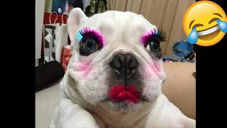 Try NOT to Laugh Challange|New Funny and Cute Dog Complilation