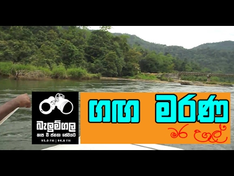 Balumgala - 21st February 2017