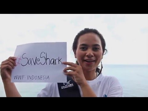 Miss Scuba Interntional 2015 - No Shark-fin Campaign Pledge