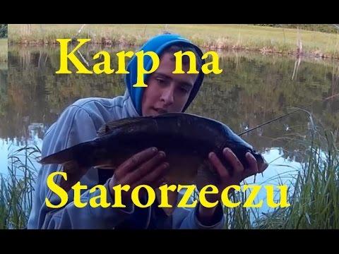 Karp Z Starorzecza Bugu-Wędkarstwo Spławikowo-gruntowe