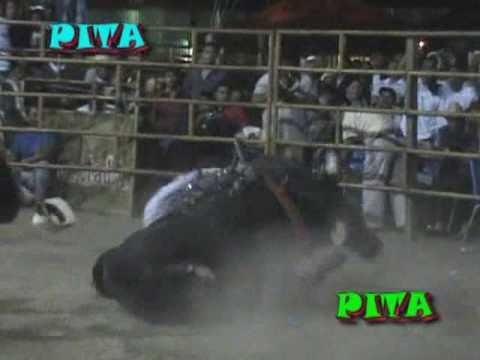 15 Toros De Rancho Los Destructores En Chinantla, Puebla