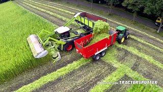 ගන්ජා හේනක් කපන්නේ මෙහෙමයි  Harvesting fiber hemp
