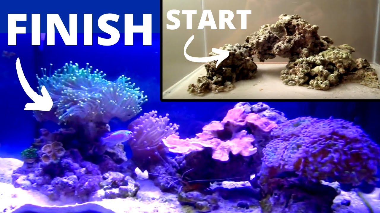 how to set up a coral tank