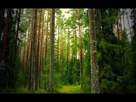 Building an Ardennes Forest Pine Tree - Tutorial