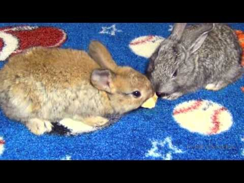 Bunny Rabbits Eating Bananas - Really Cute Baby Bunnies Pets