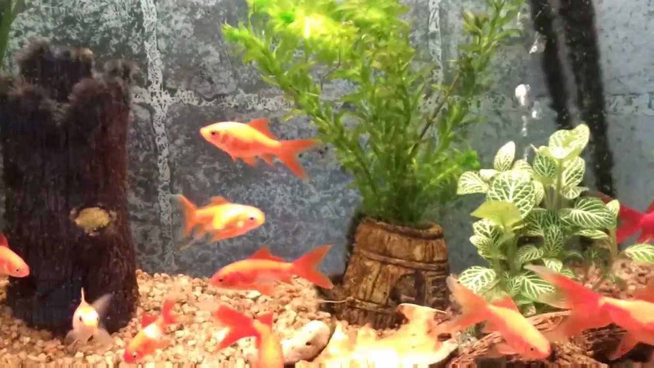 peces agua fria tropicales venta acuario mapache argentina