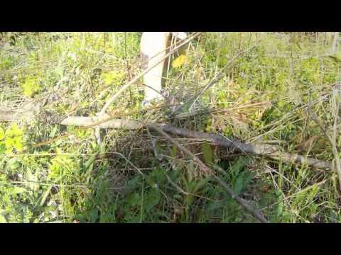 Allies Animal Intel Garter Snake