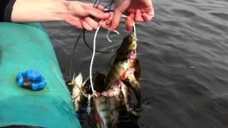 рыбалка на долгобродском водохранилище форум