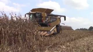 Corn Harvest 2016 Claas Lexion Combines With 18 Row Corn Heads