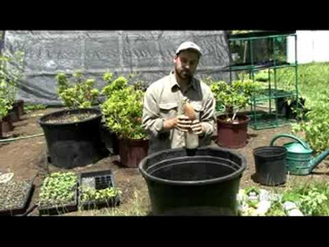 Organic Gardening - Propagation Methods