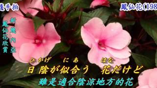 鳳仙花 1981 日語 島倉千代子 翻譯 銘哥翻唱