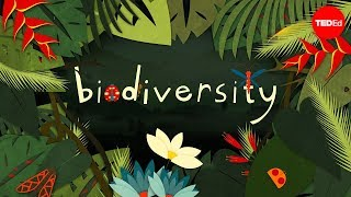 Why is biodiversity so important? - Kim Preshoff