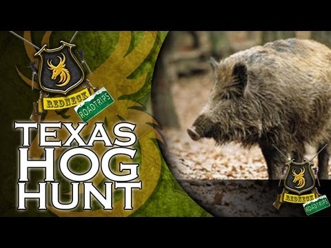 Hunting Hogs with a sword