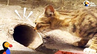 Cat Mom Waits For Rescuers To Save Her Kitten | The Dodo