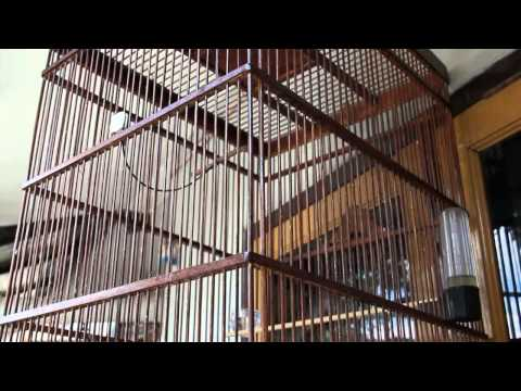 Video King Konin 3gp video