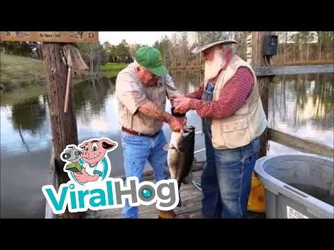釣竿無しで大物の魚を素手で釣り上げる凄い人