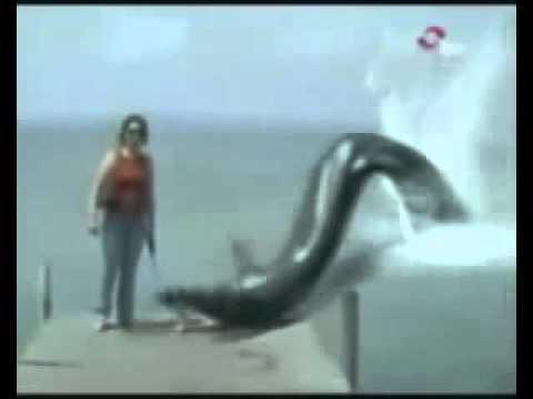 Гигантский удав вылез из воды и съел собачку!!!