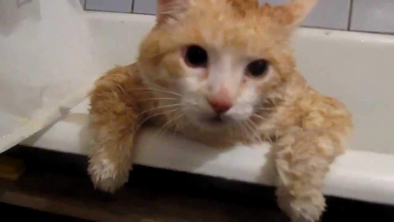 Fat Cat Fail Fail Fat Cat Struggles to