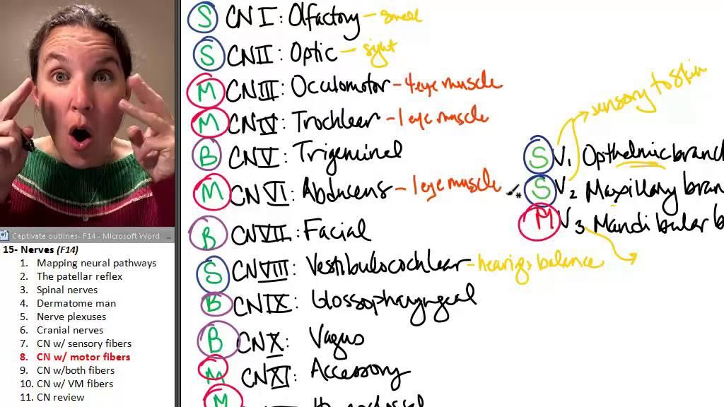 wiki list medical mnemonics