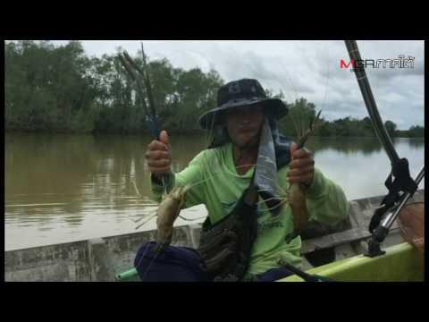ชาวบ้านริมแม่น้ำตรังจัดทัวร์ตกกุ้งแม่น้ำขายสร้างรายได้หลายหมื่น