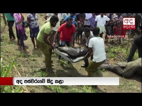 three elephants kill|eng