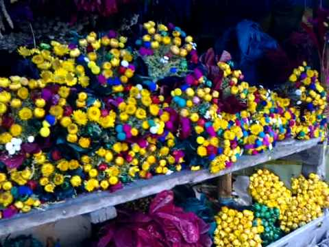 Variety Ooty flower from Kodaikanal Shop