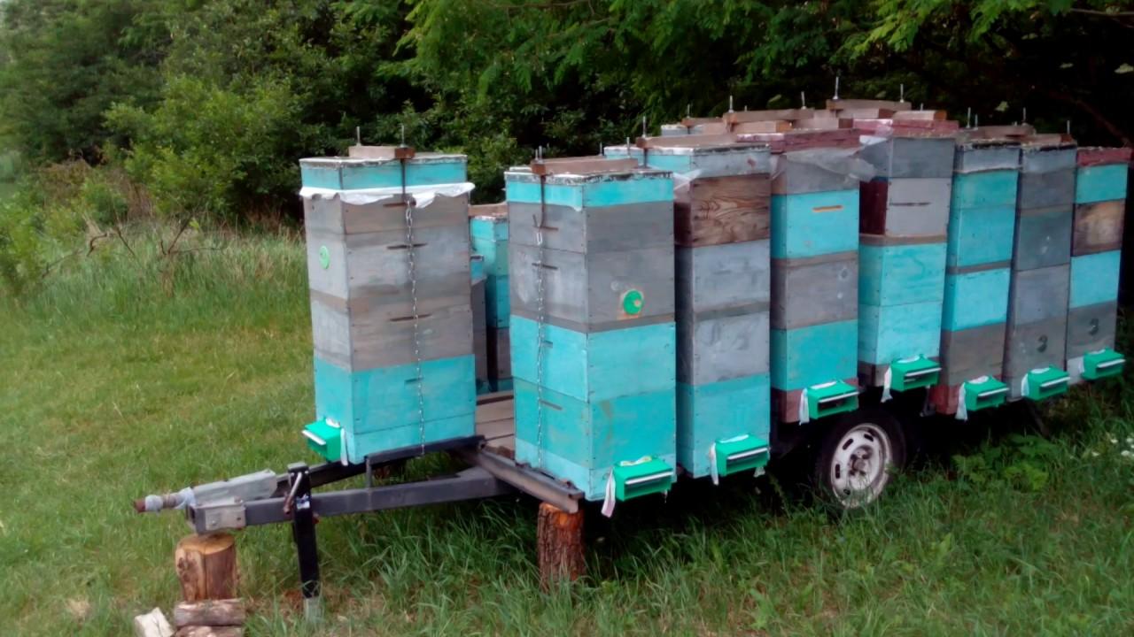 Прицепы для перевозки пчёл своими руками 852