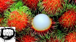 Top 10 Rarest & Tastiest Fruits In The World