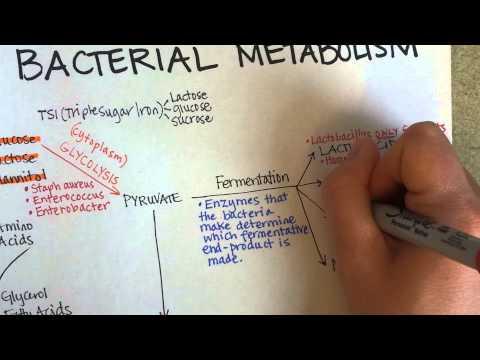 Bacterial Metabolism, Part 1