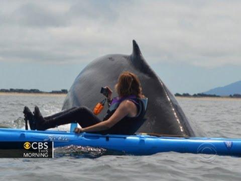 Close encounter: Kayakers get rare look at humpbacks