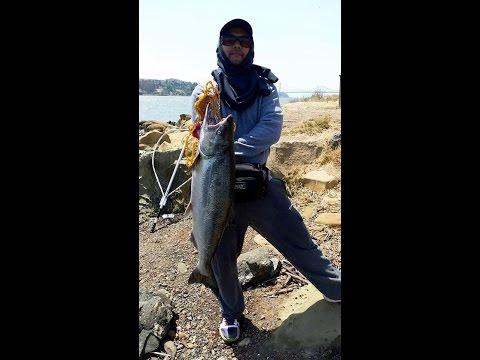 Benicia for Benicia fishing report