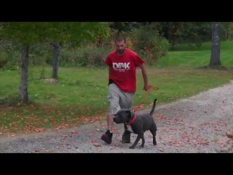 Dog training tips: Pop not pull...How to correct on leash