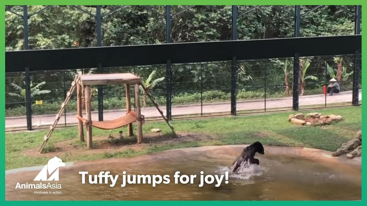 [After Being Locked Inside Cage For Years, Rescued Bear Can't Contain Excitement] Video