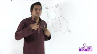 07. The Heart | হৃদপিণ্ড | OnnoRokom Pathshala