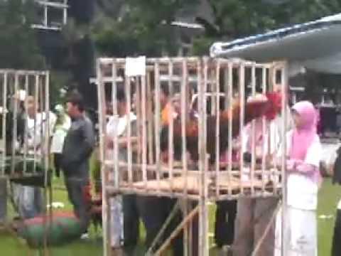 Kontes Ayam Pelung Di Ipb (pelung Manggung) video