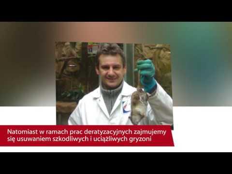 Dezynfekcja Dezynsekcja Deratyzacja Wrocław Dezmark