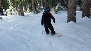 Ashton snowboard @ Mammoth - inside dense tree trail by Chair 12