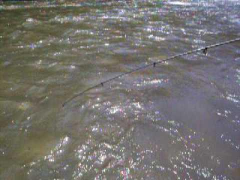 pesca medellin sabaleta bicolorada